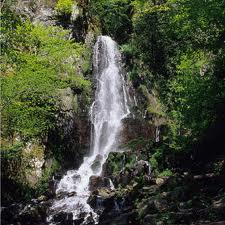 cascade nidek